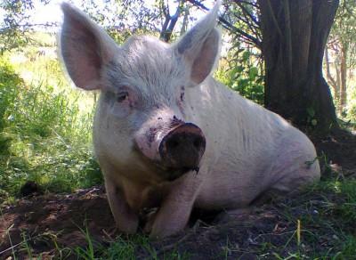Rufus (2005-2016)